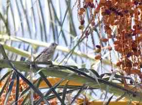 bird Himmel Park Tucson