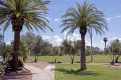 palm trees grass walking Himmel Park Tucson