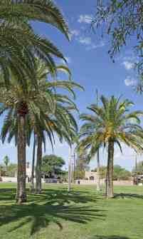 waving palm trees Himmel Park Tucson