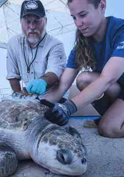 SeaWorld rescue