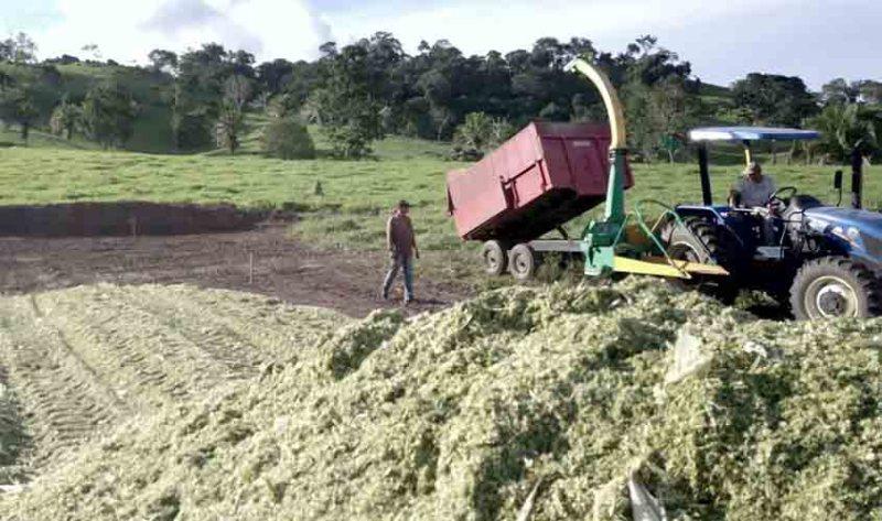 Silagem reforça alimentação do gado e evita quedas na produção de leite durante a estiagem, em Rondônia
