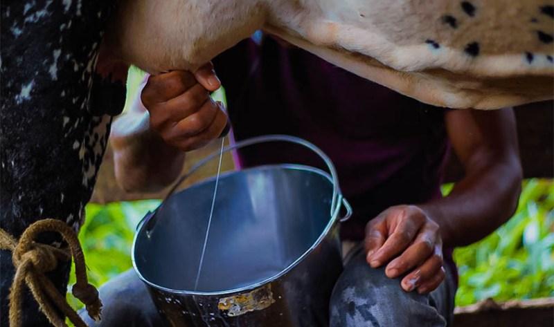 Novos preços de referência do leite são publicados em Rondônia pelo Conseleite