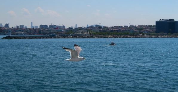 Möwe fliegt auf Augenhöhe neben der Fähre. Dahinter ist Istanbul zu sehen.