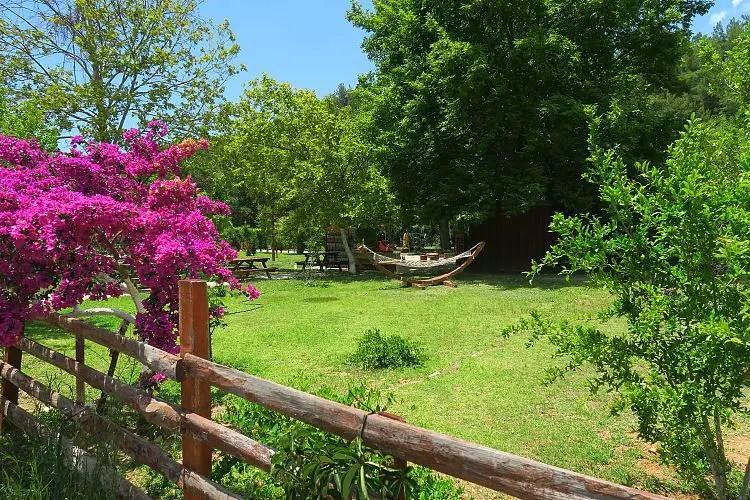 Der grüne Garten mit einer Hängematte.