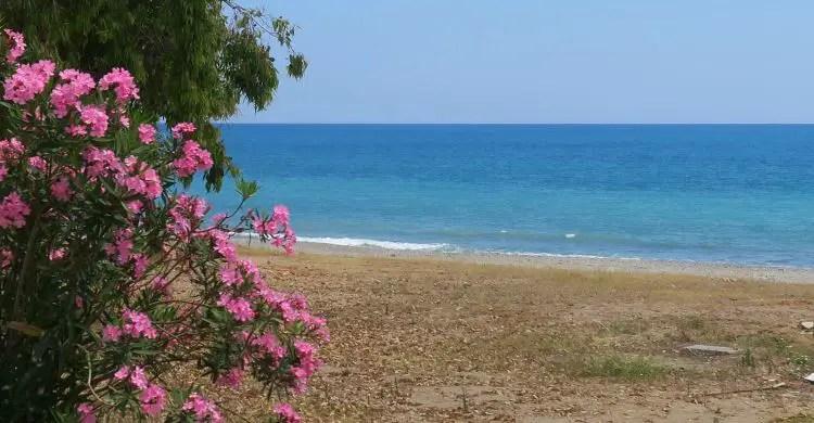 Strand und Meer mit rosafarbenen Blumen im Frühling.