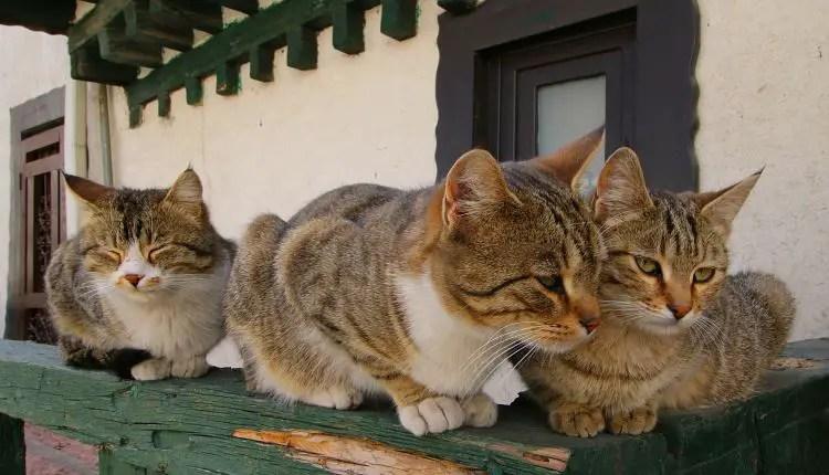 Zwei Katzen in der Altstadt