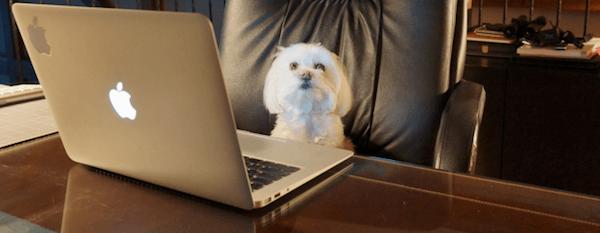 dog-at-computer1-644x250