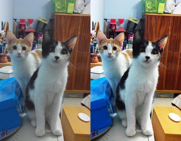 Cómo prosperar la calidad de una imagen en Photoshop, GIMP e Internet
