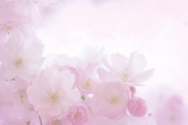 flores invitación boda