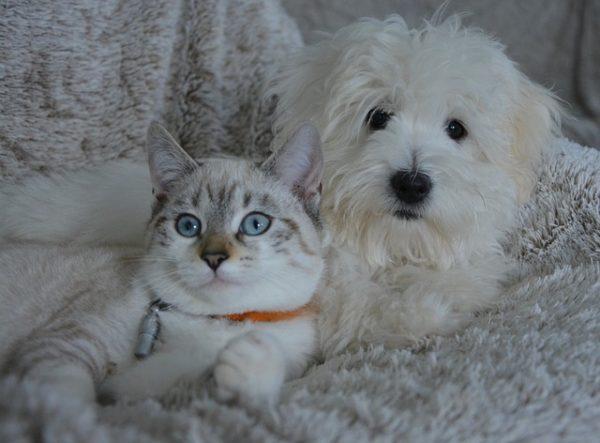 GIFs graciosos de perros y gatos para tus Estados de WhatsApp