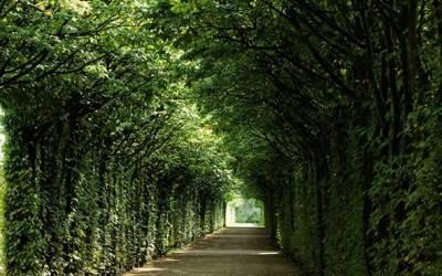 Bayreuth, el capricho de Wagner