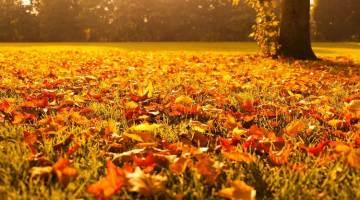 Los mejores hayedos de otoño de España, en Tu Gran Viaje