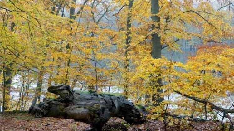 Parque Nacional de Muritz. Foto © DZT Knobloch Jochen