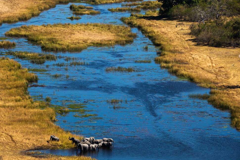 terra-elefantes-en-el-delta-del-okavango-entrevista-a-yann-arthus-bertrand-en-tu-gran-viaje