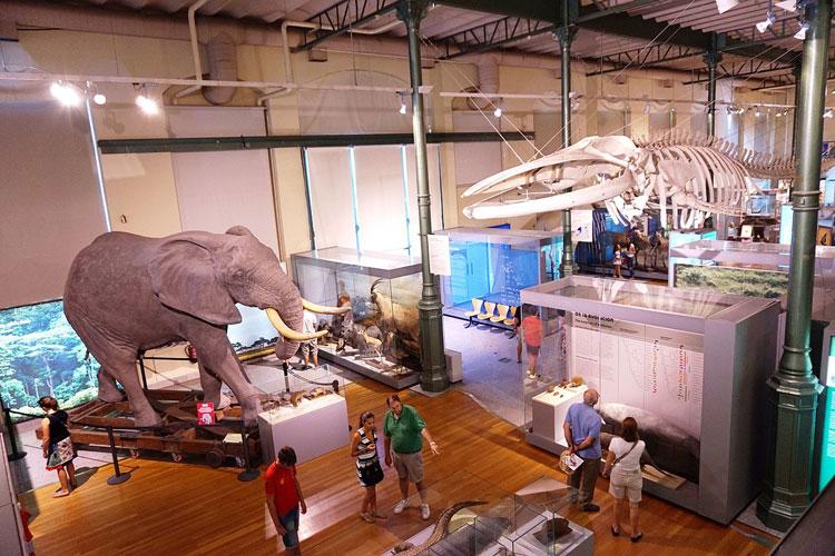 Museo Nacional de Ciencias Naturales de Madrid. Dormir en un museo. Tu Gran Viaje. Revista de viajes y turismo
