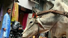 Raptos de Delhi | Tu Gran Viaje