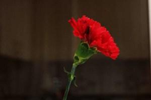 Tuğşah Bilge – Acılarımız