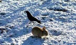 Tuğşah Bilge – Karga ve Tavşan.