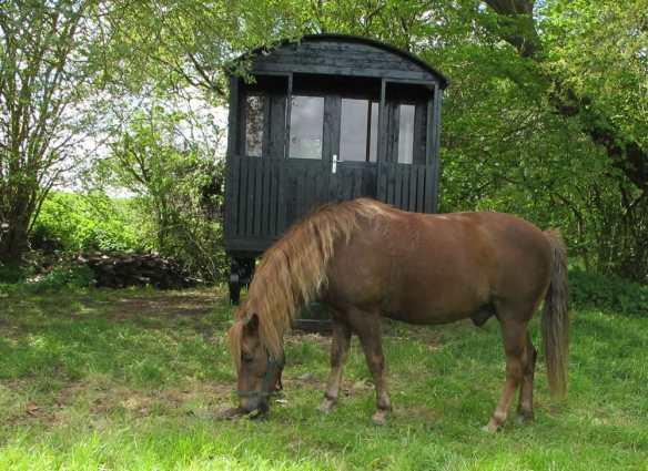 Gypsy wagon and pony