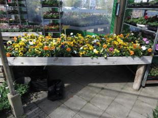 Tuincentrum Hoveniersbedrijf Odink Nijverdal (Large)2