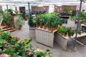 Tuincentrum-bloemsierkunst-Odink-winkel-3359