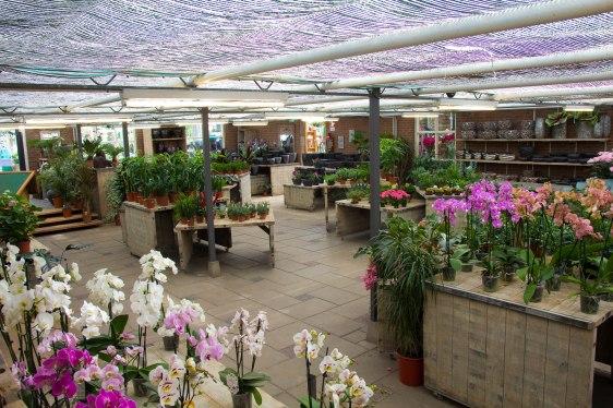 Tuincentrum-bloemsierkunst-Odink-winkel-3364