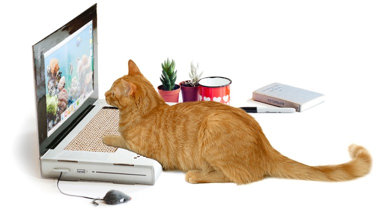 chat-pc