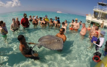 Cayman Bucket List Stingray City