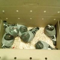Box of 6 Leen Boers