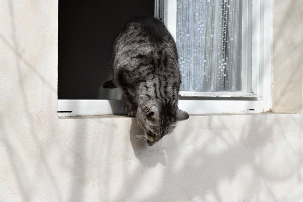 Ankara Yaşamkent Kedi Sineklik