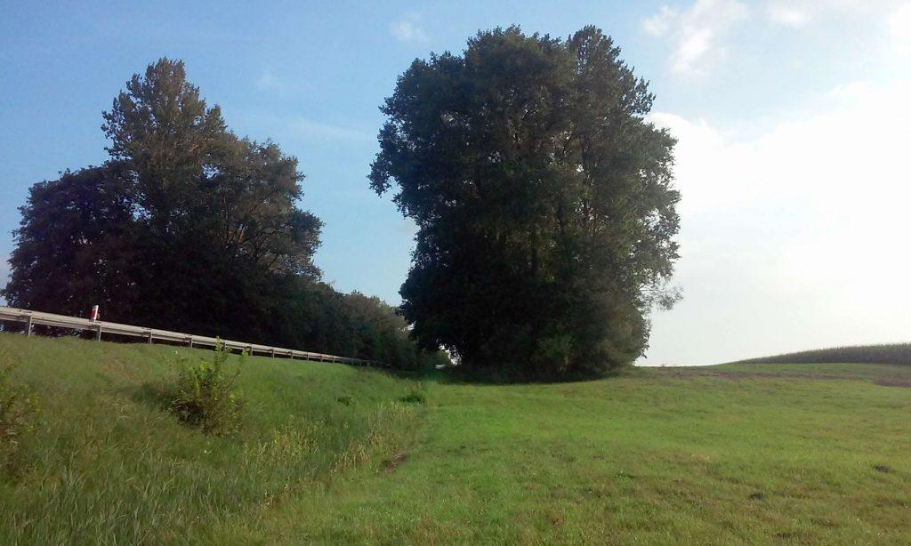 Starodrzewy piękne polish program ochrony old groth tree sare drzewa nature przyroda protection Inowrocław Kujawy Poland środowiska wycinka natury lasy animal wegan vegun ekologia ecology