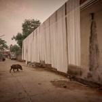 バグルー村のインド更紗|インド旅行記01