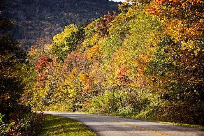 Hickory roads