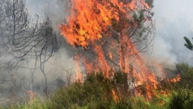Photo of 42 حريقا خلال ثلاثة أيام