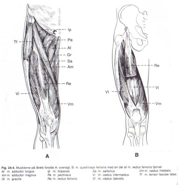 Lateralis Vastus Stretch