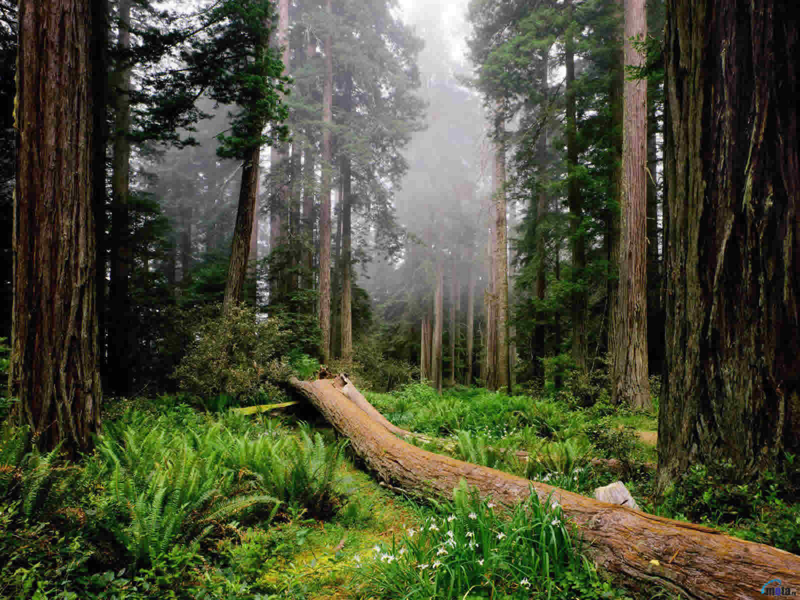 El rescate del espíritu y de la naturaleza