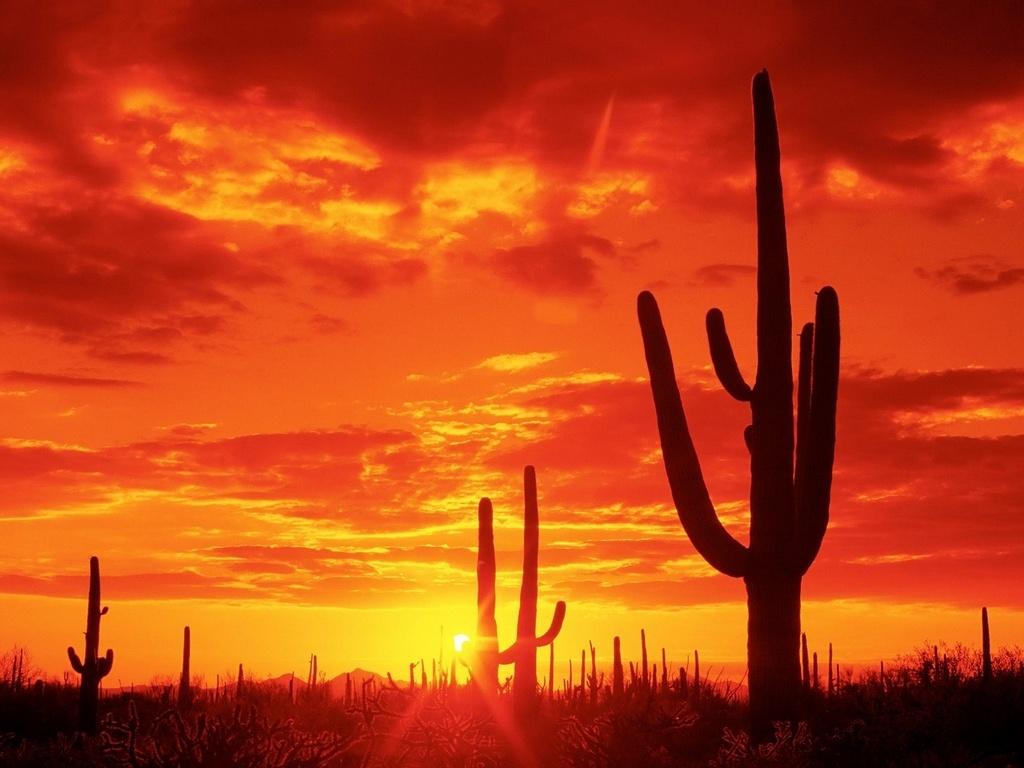 Desiertos en México