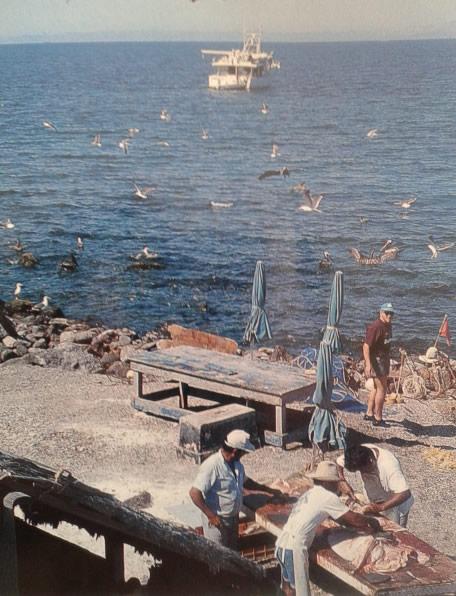 El Pardito en el Mar de Cortés