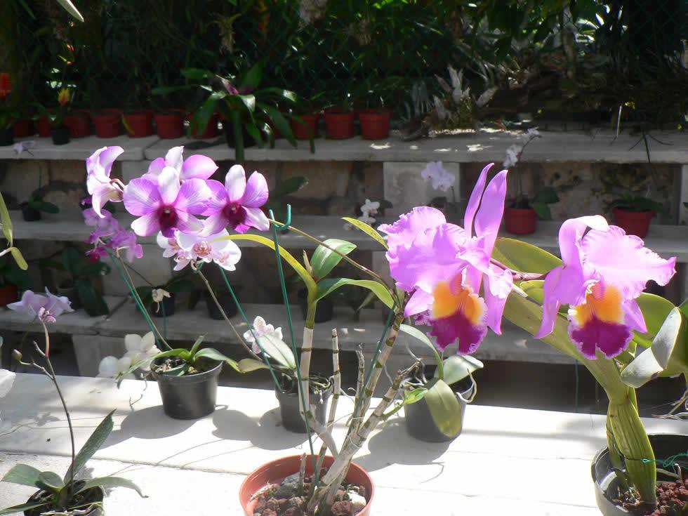 Orquídeas en Xcaret