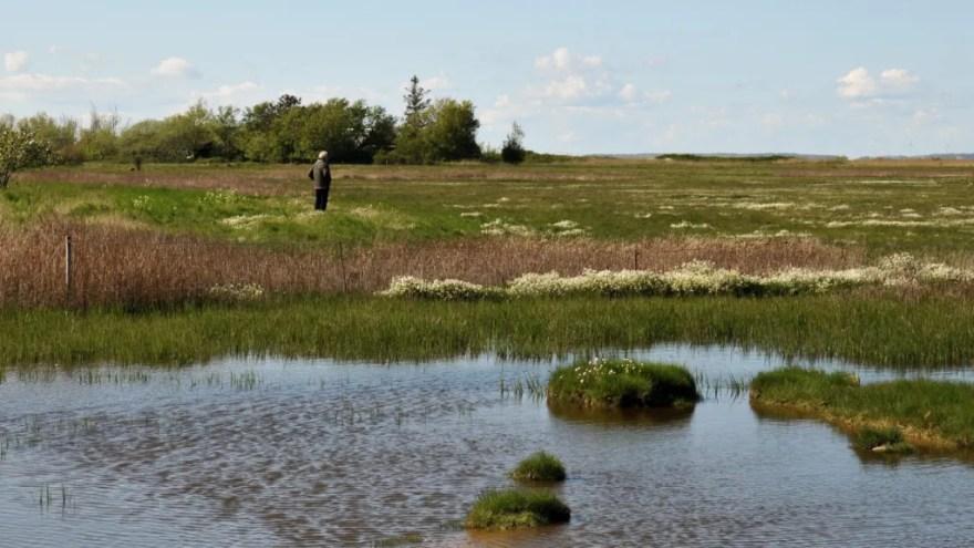 Nu skal de lokale bidrage med deres gode historier fra Naturpark Åmosen. Naturparken på Vestsjælland strækker sig fra Storebælt til Store Åmose mellem Sorø og Kalundborg. (Foto: Sofie Cold Ravnkilde)