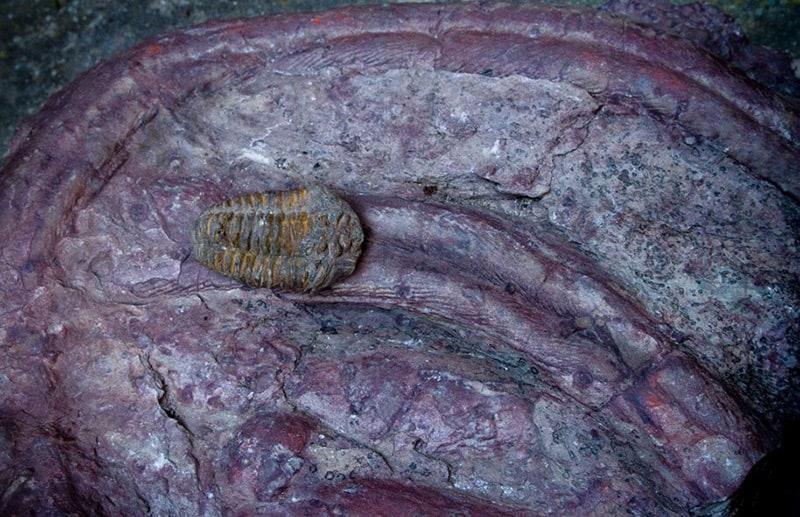 Trilobiters del Geoparque Villuercas