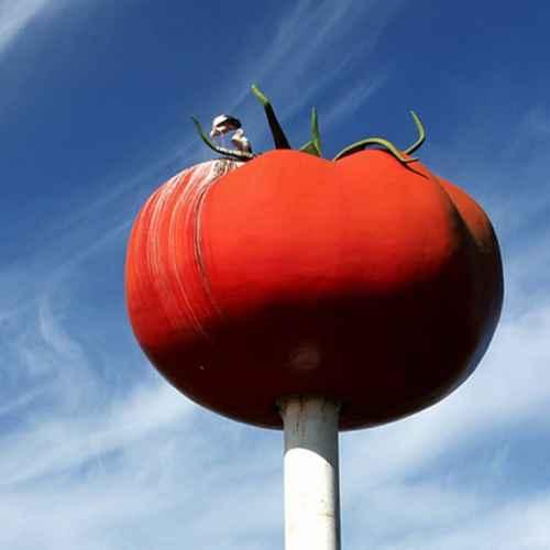 Rotonda del Tomate de Miajadas