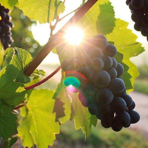 vinos-extremadura-enologia-enoturismo-riberadelguadiana