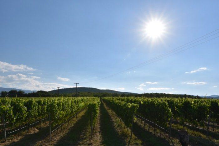 grecia turismo de vinho