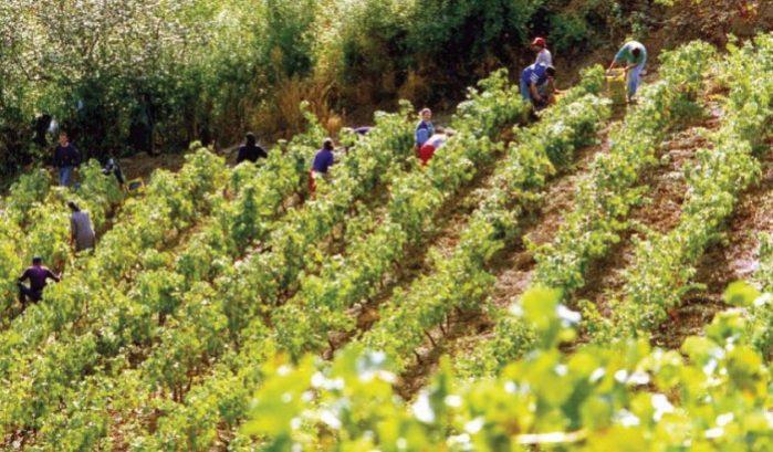 turismo de vinho