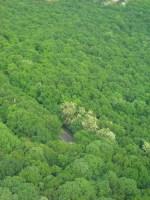 MONTE AVALA - Il bosco visto dalla Torre dell'Avala (Marija Petrović)