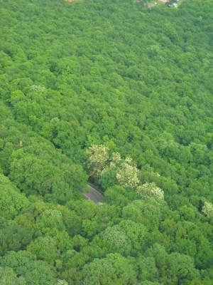 MONTE AVALA: il bosco visto dalla Torre dell'Avala (Marija Petrović)