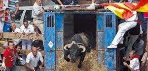 Toro con soga en Lodosa 2