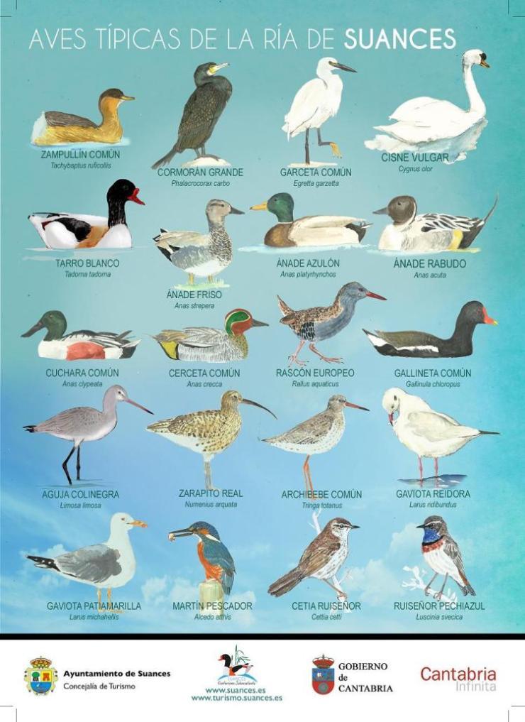 avistamiento de aves en suances