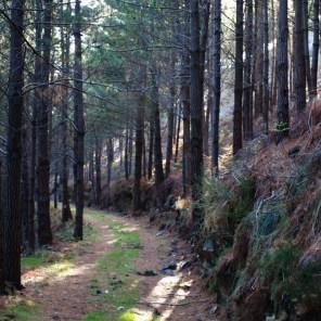 Pinar de Valdefuentes, Ribadesella